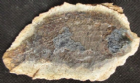 TRIASSIC FISH IN NODULE FROM MADAGASCAR.